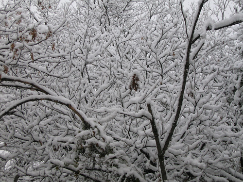 A close-up of tree branches covered with snow