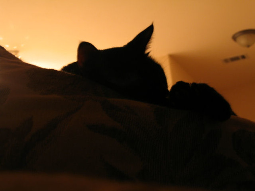 A silhouette close-up of Kako lying on the couch