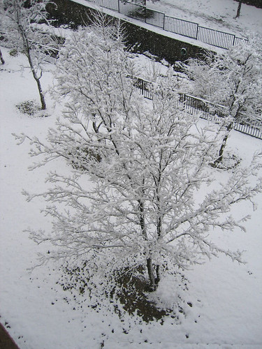 Looking down at a tree covered with snow