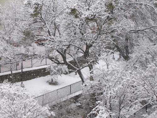 A close-up of trees covered by heavy snowfall