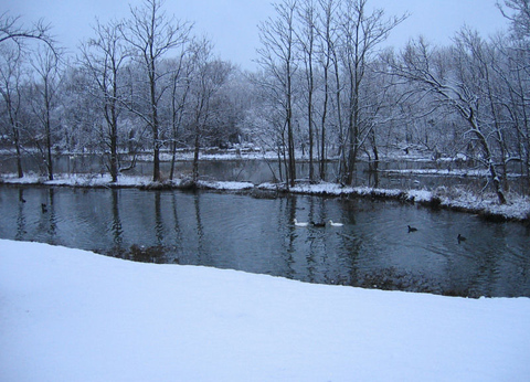 Ducks swimming along a snow-flanked creek