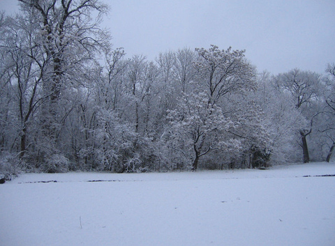 Looking across a snow-covered field toward woodlands blanketed in white