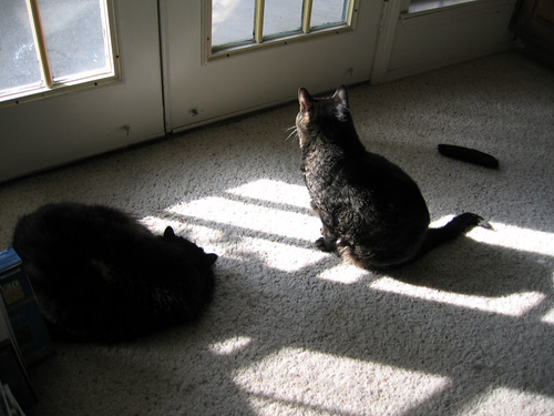 Vazra lying in the sun as Grendel joins him