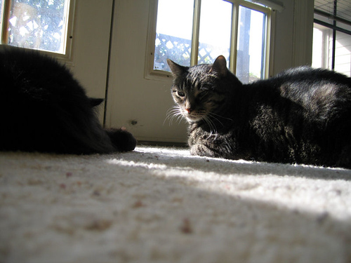 Vazra and Grendel lying in the sun