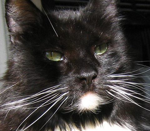 Close-up of Loki