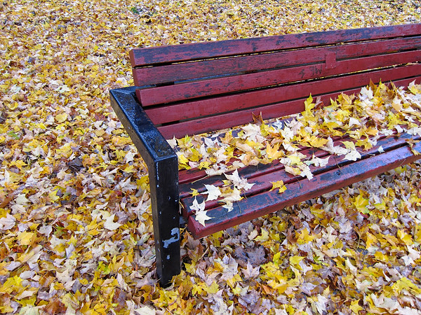 bench covered and surrounded by leaves