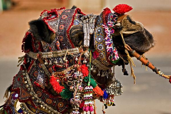 rajasthan culture