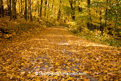 Autumn Road Scene with Fallen Leaves, Sauk County, Wisconsin