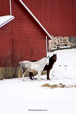 Farm Scene with Two Horses, Dane County, Wisconsin