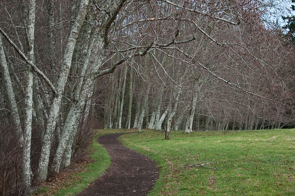 alders along a path