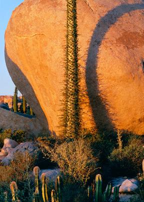 Cirios, Boulder, Baja California, Mexico by Philip Hyde