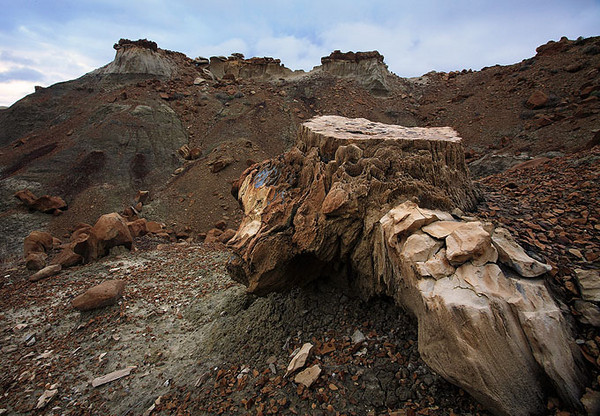 Petrified tree stump