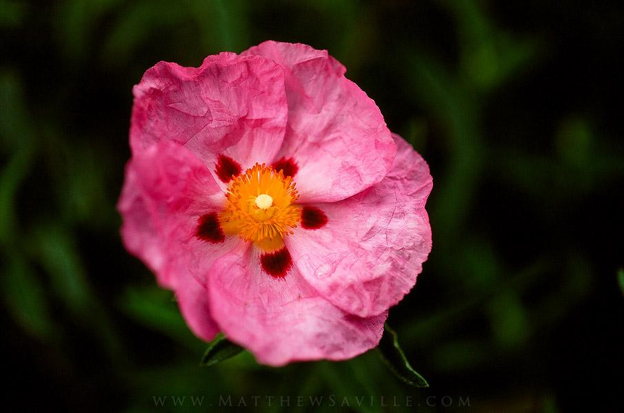 velvia macro flower