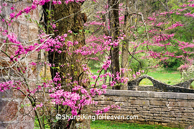 Blossoming Redbud and Stone Walls, Spring Mill State Park, Lawrence County, Indiana