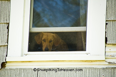 Dog in Upstairs Window at the Moonshine Store, Clark County, Illinois