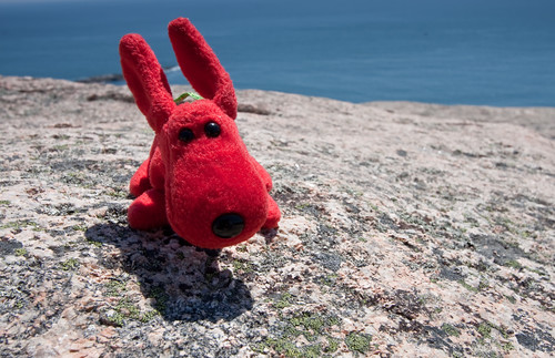Rover, high on Gorham Mountain, in Acadia national park