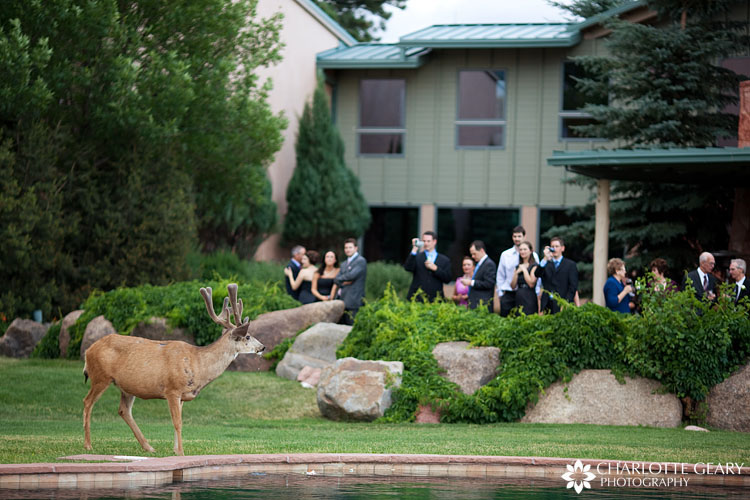 Deer at the Garden of the Gods Club