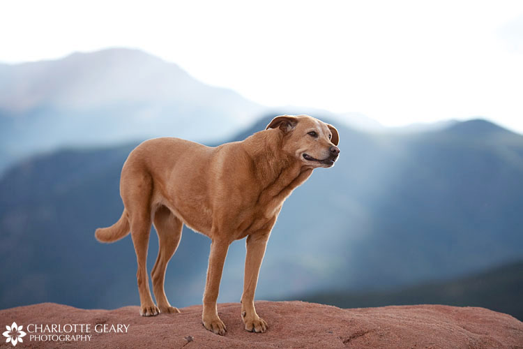 Dog in front of Pikes Peak