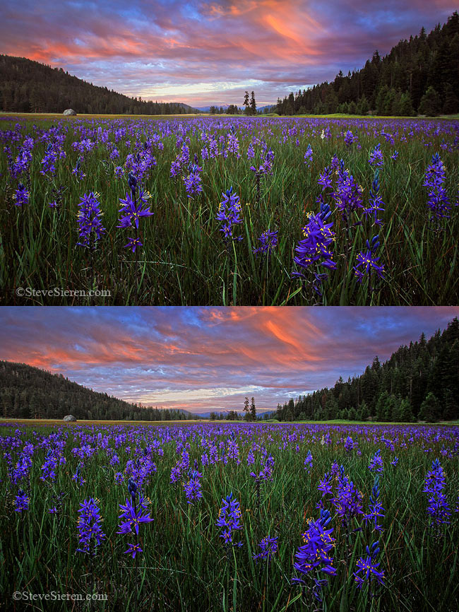 Single shot and HDR version of Wild Mountain Lillies