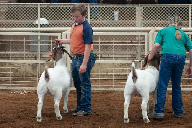 20190105_eosc_goats_showmanship-and-does438.jpg