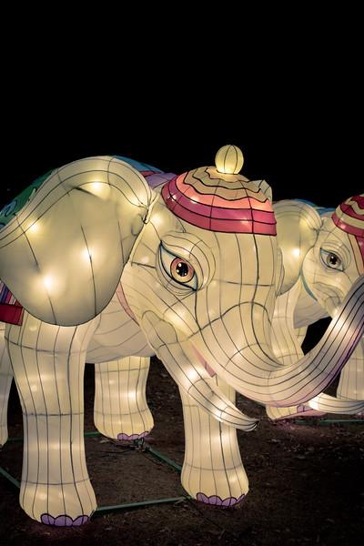 Chinese Lantern Festival-5288.jpg