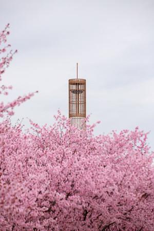 April 2021 - Spring Flowers