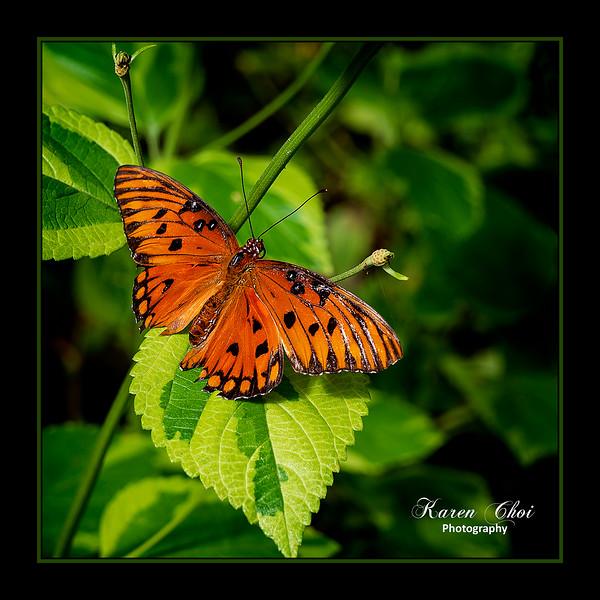 sm Orange and black butterfly 2.jpg