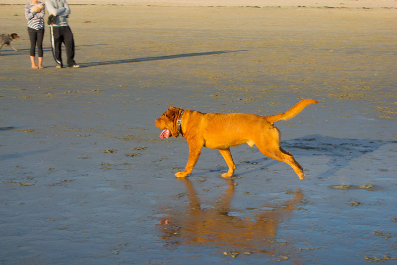 dogs_beach-49.jpg
