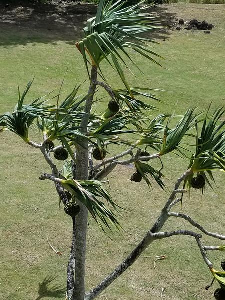 Martinique (52).jpg
