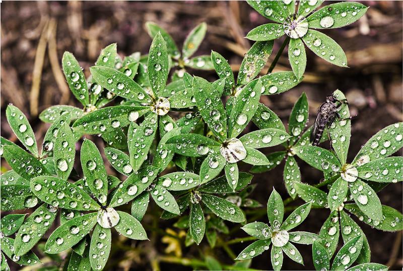 Green Drops 1.jpg