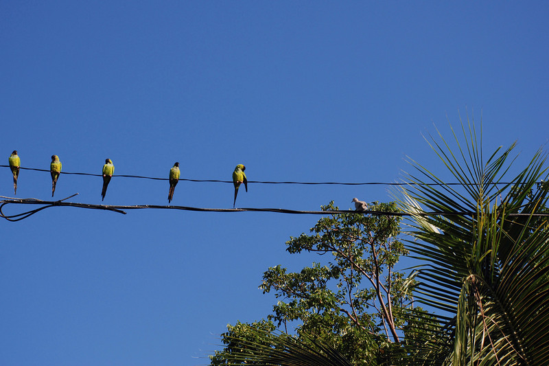 Birds on a Wire by Penny Jesse
