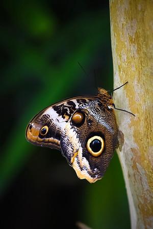 Art Show Butterflies