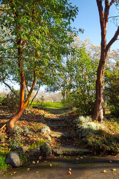 beacon hill park-4.jpg