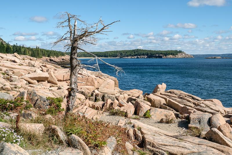 Rocky Shoreline of Acadia National Park in Maine.
