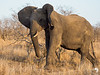 Elephant showing me who is boss