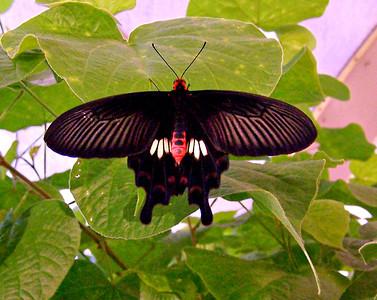 Capitol Butterflies