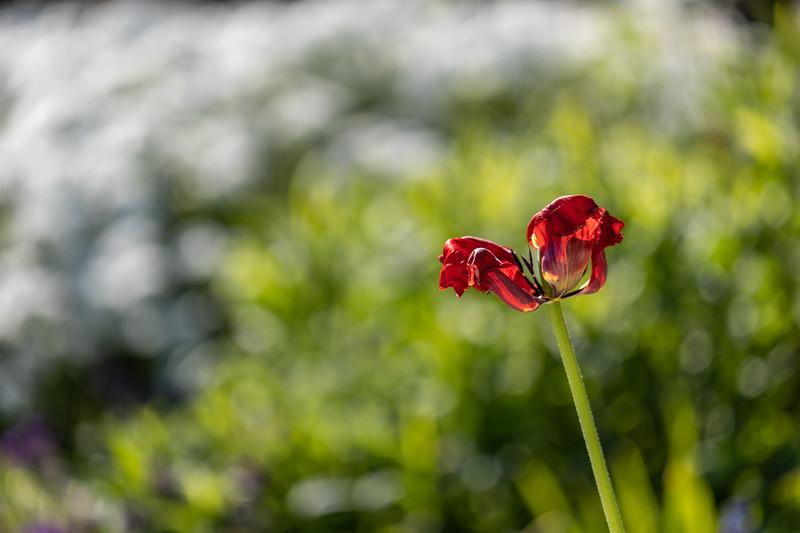 Nana's garden 24 Apr 2020-15.jpg