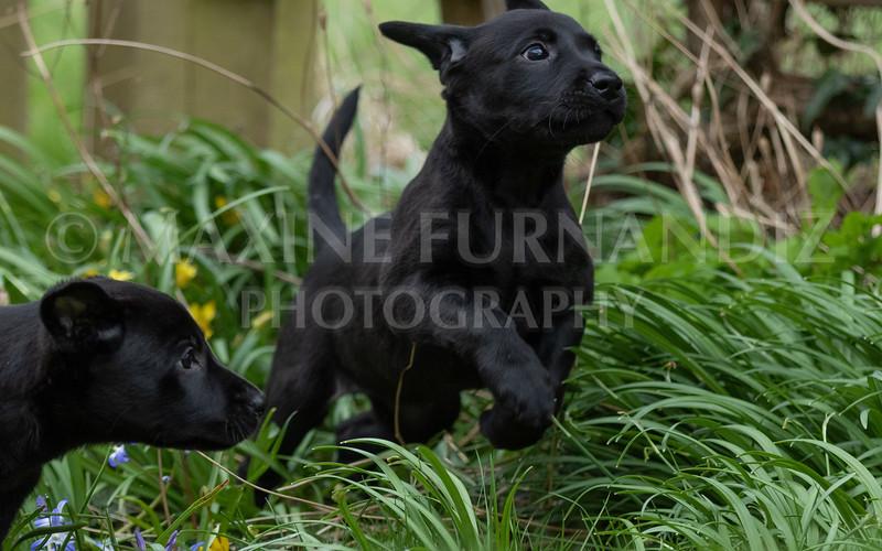 Weika Puppies 24 March 2019-6416.jpg