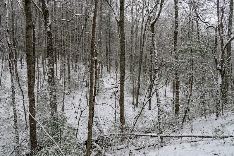 Ridgeline Trail -- 2,550'