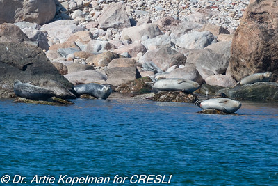 CRESLI/Viking Fleet Seal Cruise 2018-03-18
