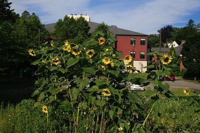Organic Garden & Composting at Govs