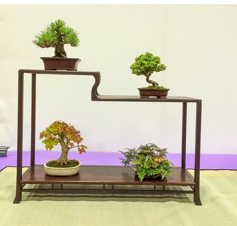 Redwood Empire Bonsai Show 2014