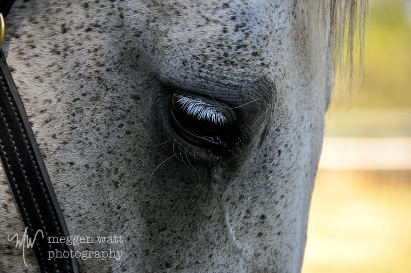 EB&Horses-024.jpg