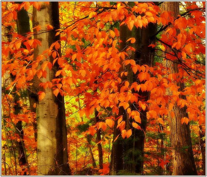 M-C-98--Autumn Orange Orton.jpg