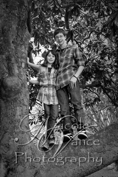In the Tree