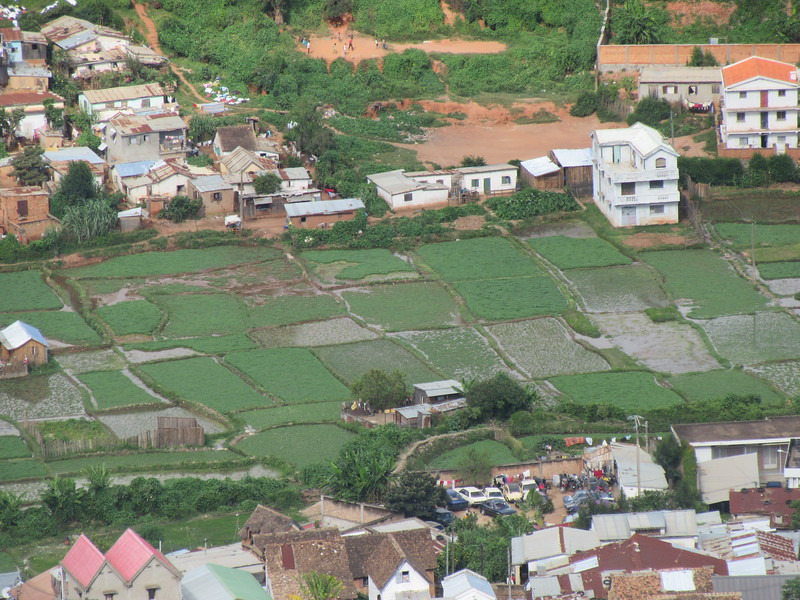 035_Antananarivo. Rice paddies are tended right up to the edge of the city.JPG