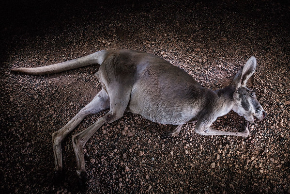 kilometer19-fotografie-travel-australia-070302-0025