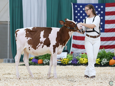 All-American Red Holstein Show 2018