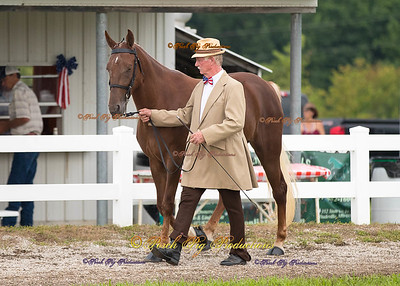 Bolivar Saddle Club 2016