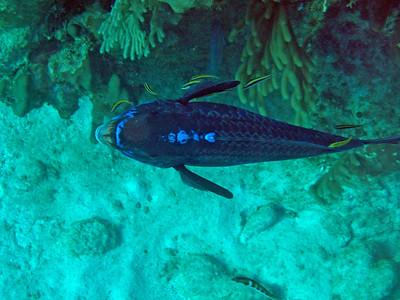 Honduras Reef Life II